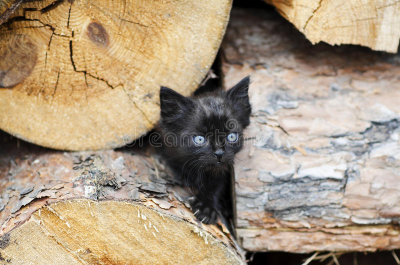 Little Kitten stock image