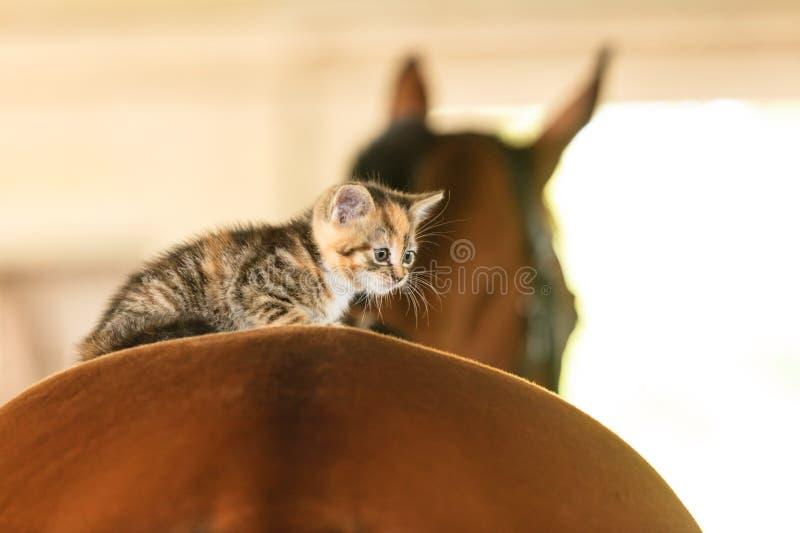 Little kitten kitty cat animal on horse horseback. Little cute kitten kitty cat pet animal on horse horseback royalty free stock image