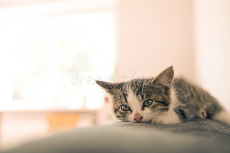 Little kitten sleeps on a coverlet. stock photos