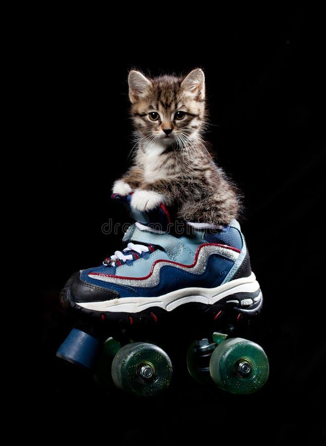 Free Little Kitten On The Roller Skates. Royalty Free Stock Photo - 14628635