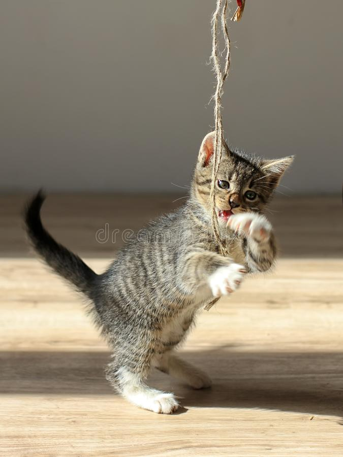 Little kitten playing with rope royalty free stock images