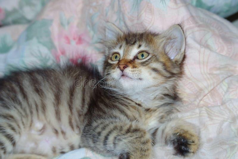 Little kitten resting on bed royalty free stock photo