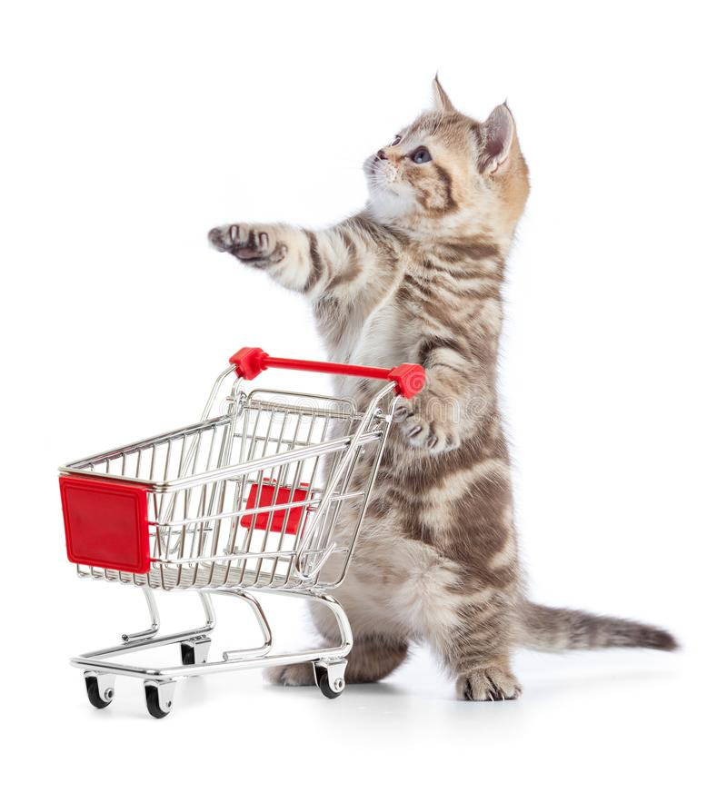 Funny kitten cat with shopping cart isolated. Little kitten with shopping cart isolated on white royalty free stock images