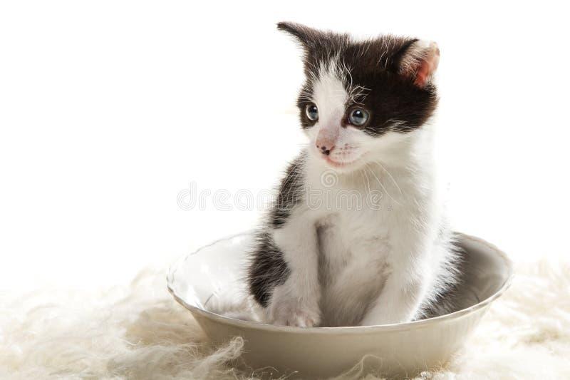 Little kitten sitting in a bowl stock photo