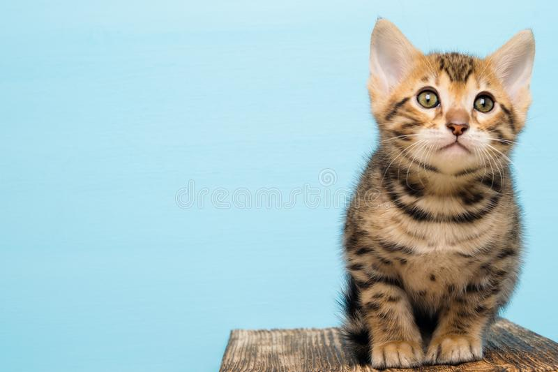 Little kitten sitting on a wooden board on a blue background stock photography