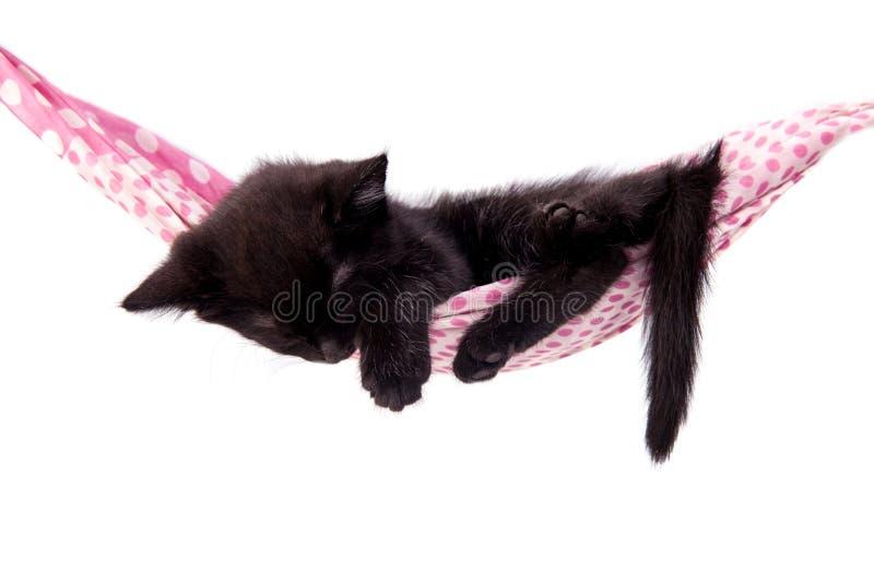 Little kitten sleeps on a coverlet. royalty free stock image