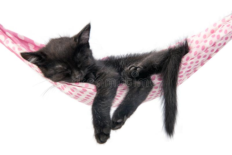 Little kitten sleeps on a coverlet. Small cat sleeps sweetly as. A small bed. Sleeping cat in home on a blur light background. Cats rest after eating. a small stock image