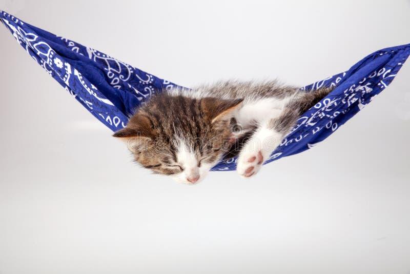 Little kitten sleeps on a coverlet. royalty free stock photography