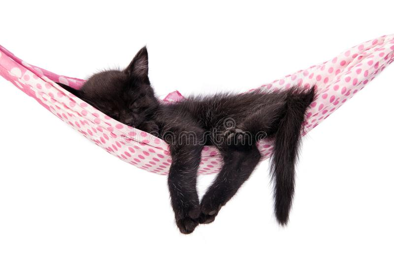 Little kitten sleeps on a coverlet. Small cat sleeps sweetly as royalty free stock photo