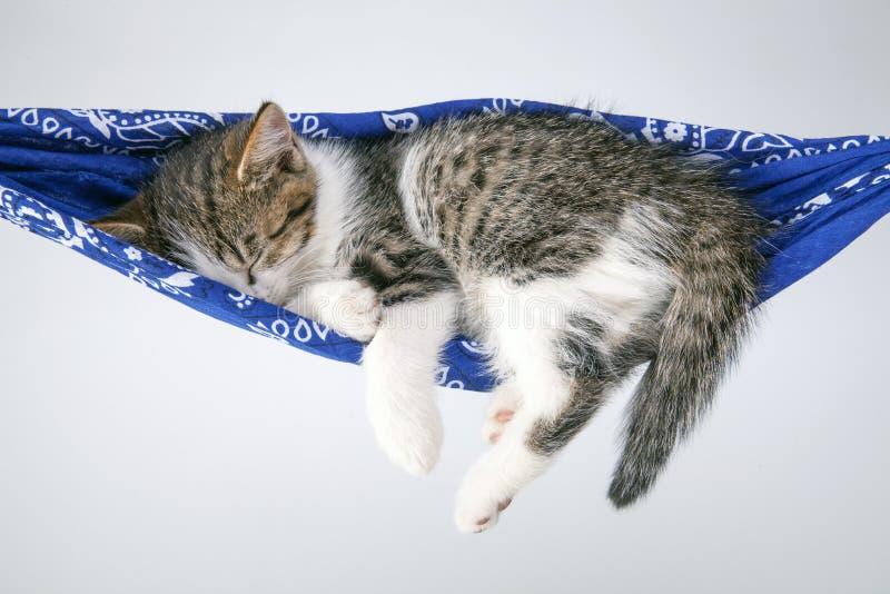 Little kitten sleeps on a coverlet. stock images