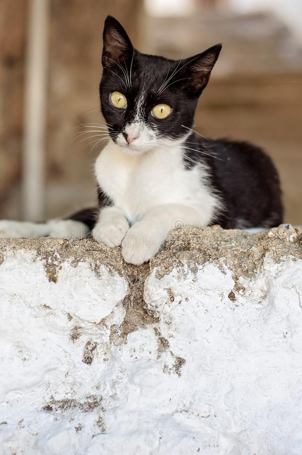 A little kitten stray cat on the streets of Rhodes, Greece. A little kitten stray cat on the streets of Rhodes Greece royalty free stock photography