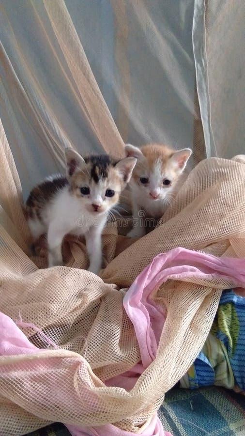 Little kitten. Vivo Nature click from house stock image
