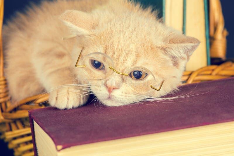 Little kitten wearing glasses stock photos