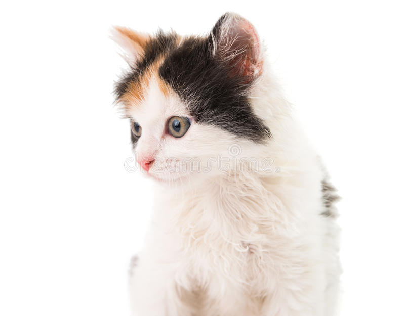 Download Little kitten stock photo. Image of little, sucker, orange - 35211326