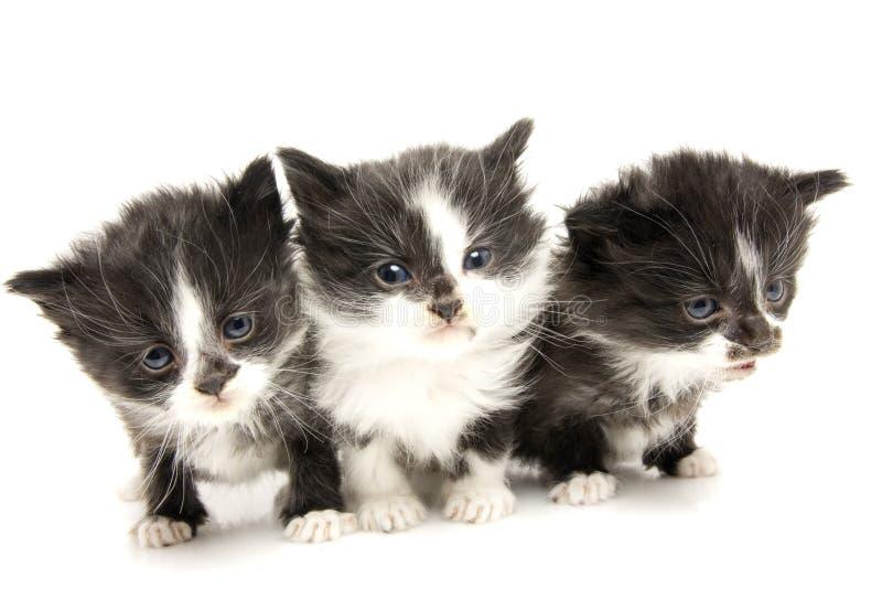 Little kittens. stock photography