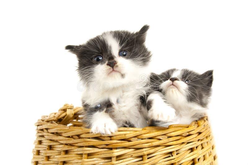 Little kittens. stock photos