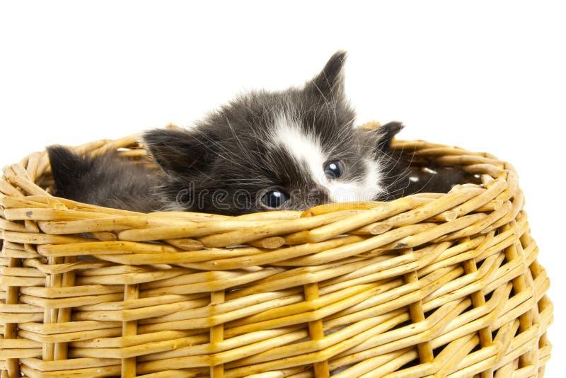 Little kittens. royalty free stock image