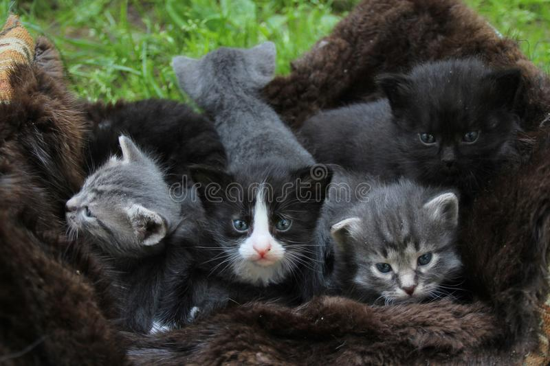 Little Kittens afraid to go out to your mat. royalty free stock images