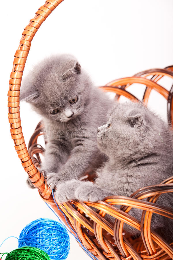 Little kittens in the basket stock photo