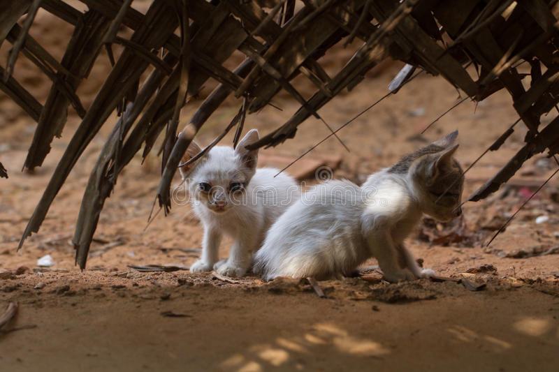 Little kittens exploring the world stock photo
