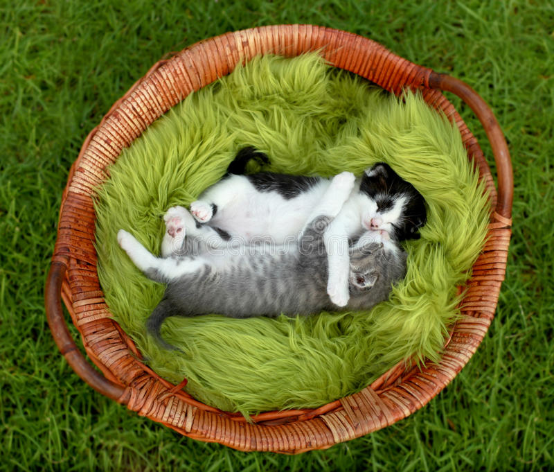 Download Little Kittens Hugging Outdoors In Natural Light Stock Image - Image: 26506131