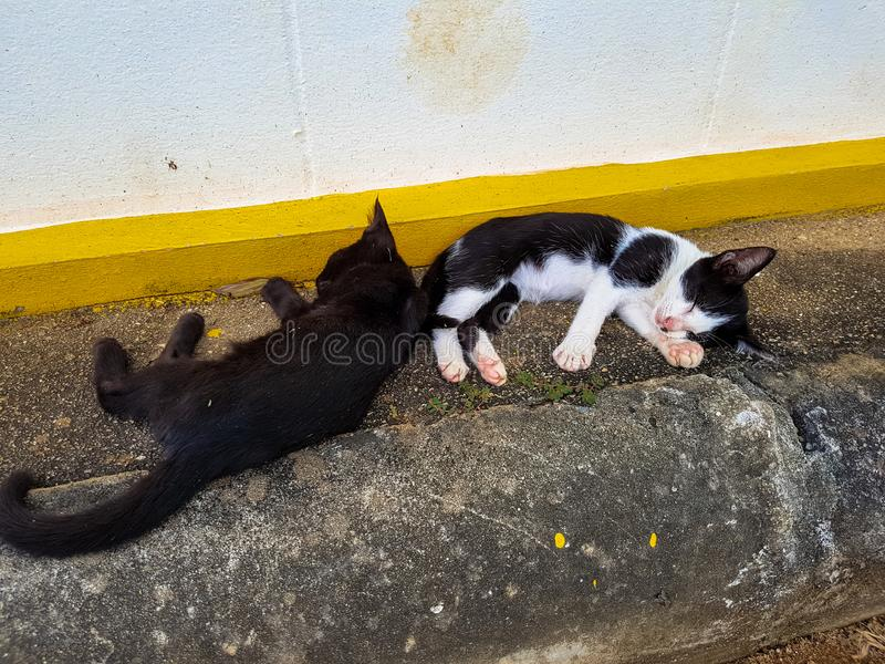 Little kittens sleeping on road royalty free stock photo