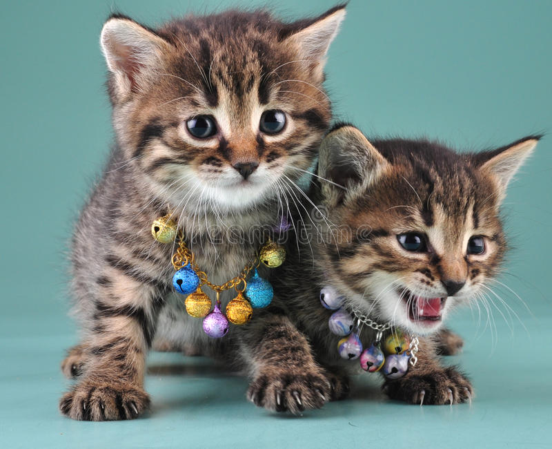 Download Little Kittens With Small Metal Jingle Bells Beads Stock Photo - Image of decor, looking: 35211974