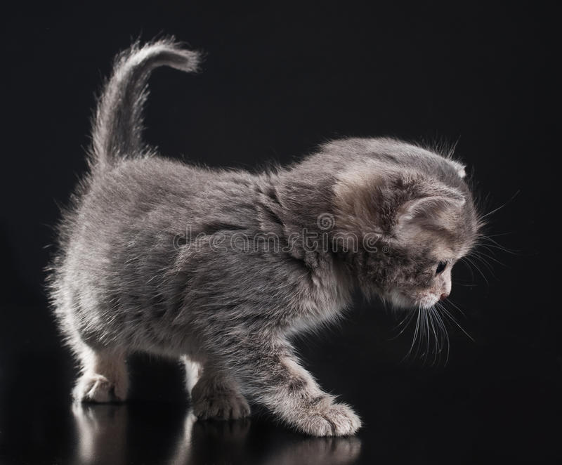Little kitty royalty free stock images