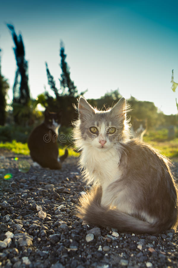 Download Little kitty stock photo. Image of mammal, healthy, small - 19632928