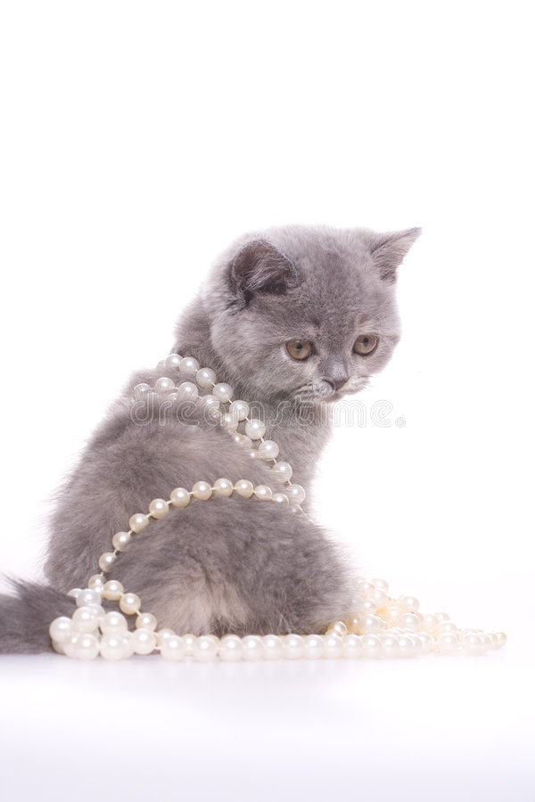 Little kitty. With pearls on a white background royalty free stock photography