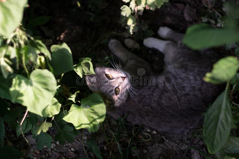 The little kitty cat. Playing with the hedgehog, outdoors stock photos