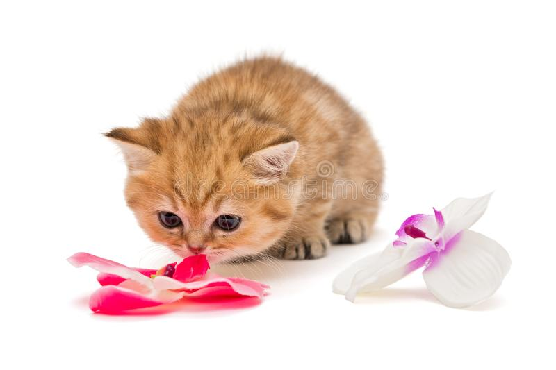 Little kitty and a flower stock photos