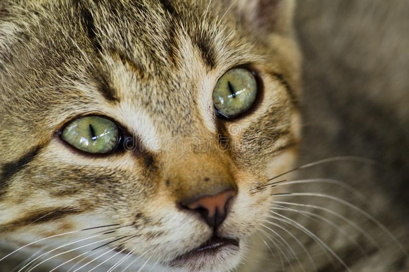 Little kitty looking in photographer. royalty free stock photo