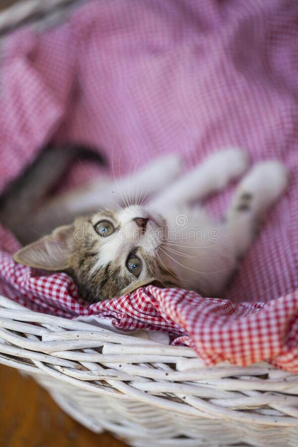 Little kitty looking up royalty free stock photos