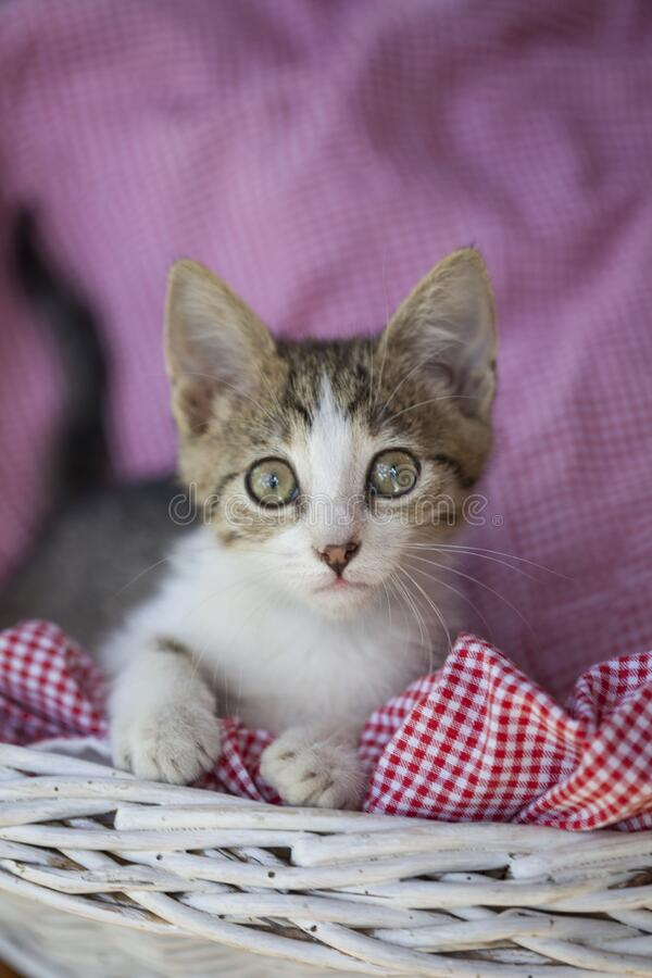 Little kitty looking up royalty free stock image