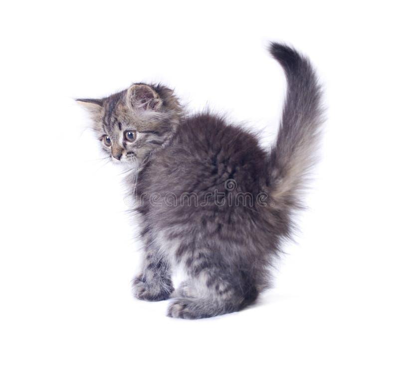 Little kitty turned stock image
