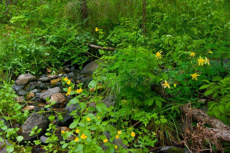 Little L.O. Trail No. 6 stock photo