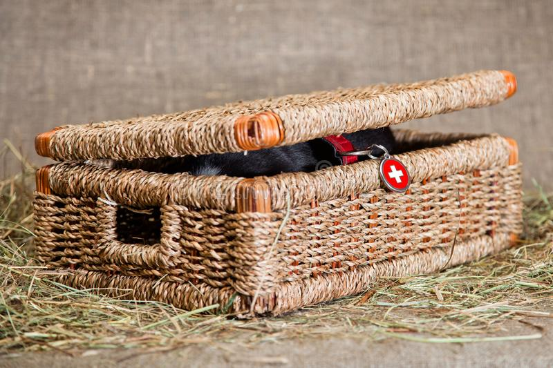 Little lifeguard hid in a basket royalty free stock photo