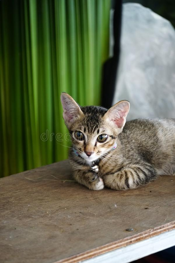 Little cat lay and look. Little lovely cat lay and looking us like want to ask something stock images