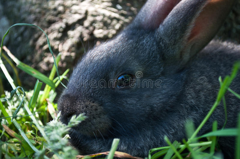 Download Little Mammal Rabbit On A Grass Stock Image - Image: 20123127