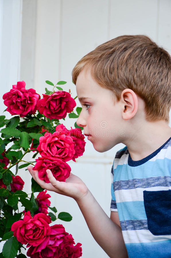 Little model. Beautiful blond smiling little boy near a roses garden royalty free stock image