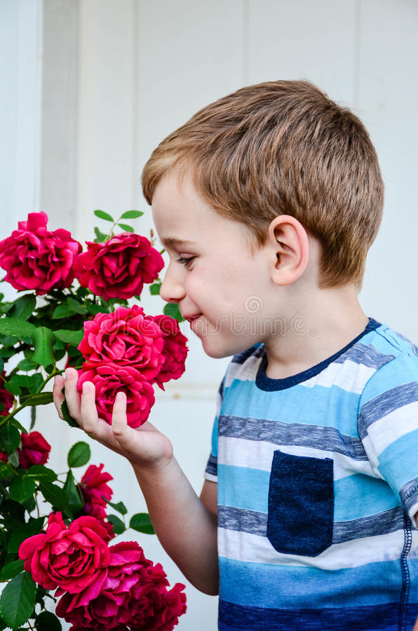 Little model. Beautiful blond smiling little boy near a roses garden royalty free stock photo
