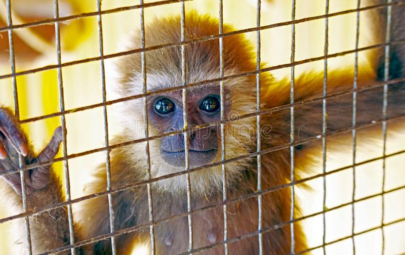 Little monkey in a cage royalty free stock photo