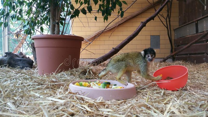 Little monkey with red bottle stock photos