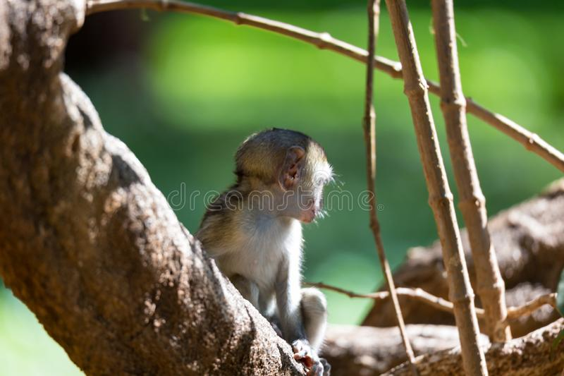 A little monkey sits and looks very curious. One little monkey sits and looks very curious stock image