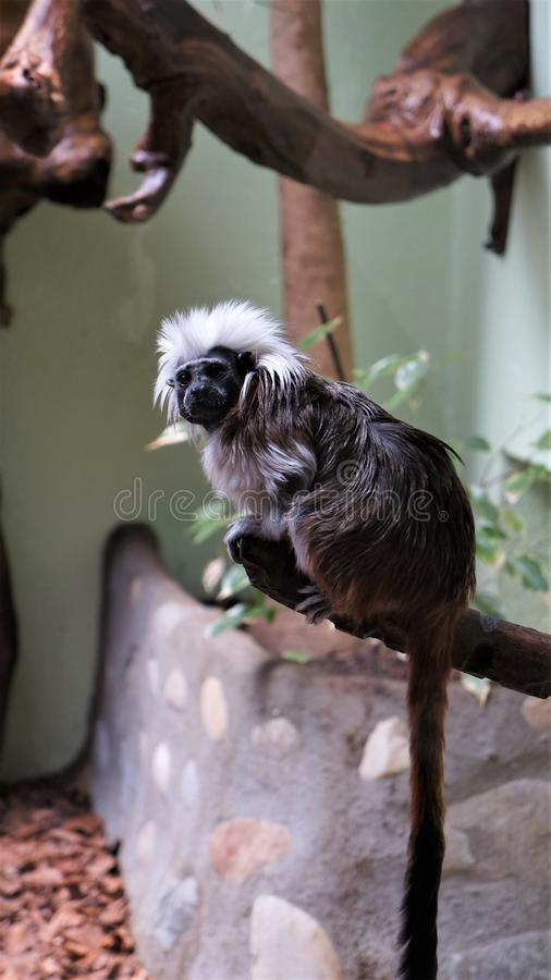 A monkey in a zoo stock photography