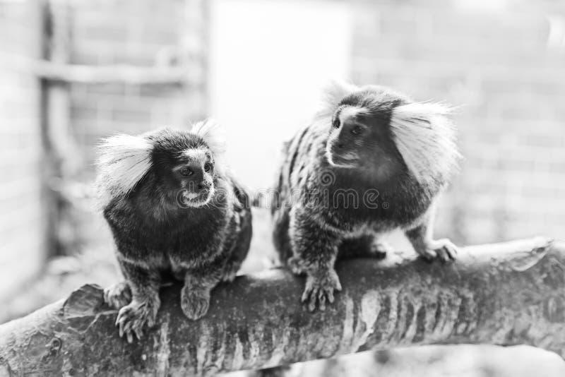 Little monkey zoo royalty free stock photo