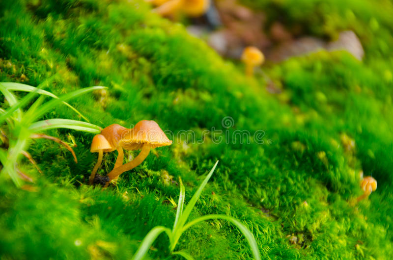 little mushrooms stock photography