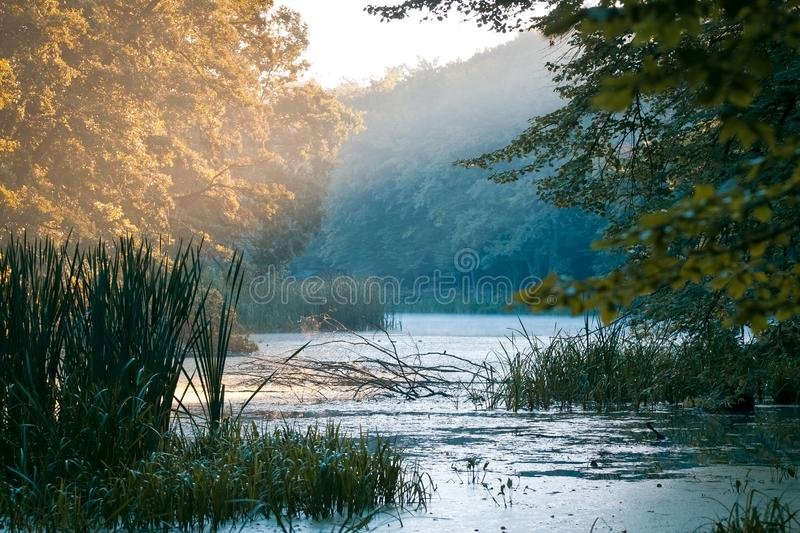 Little natural lake in forest, foggy morning beautiful sunrise, summer, sun rays on big trees, still water surface, nature royalty free stock images