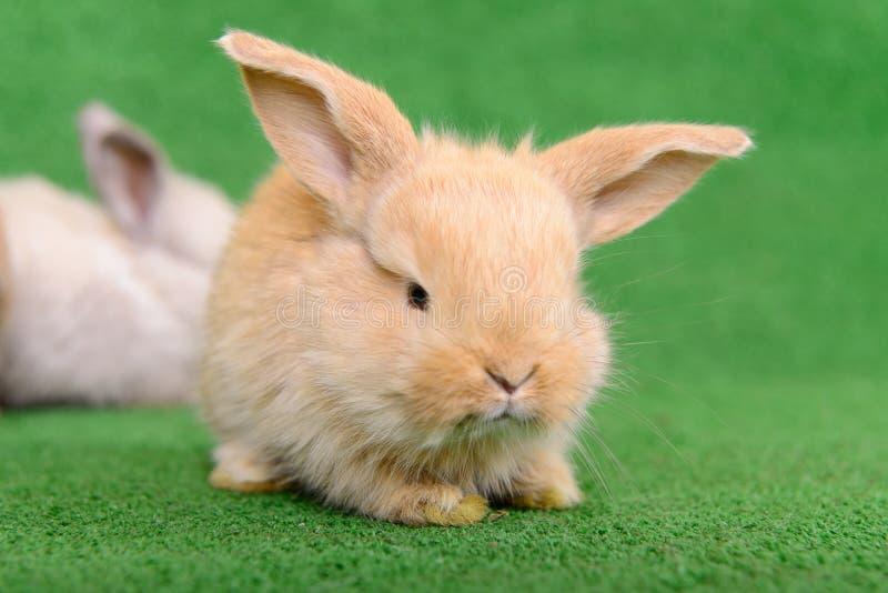 Download Little newborn rabbit stock photo. Image of green, grey - 32008574